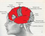 human brain evolution weakened regions