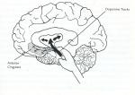 internet addiction dopamine tracks